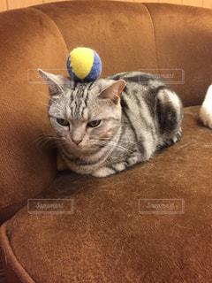 猫の写真・画像素材[235531]