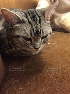 猫の写真・画像素材[235544]