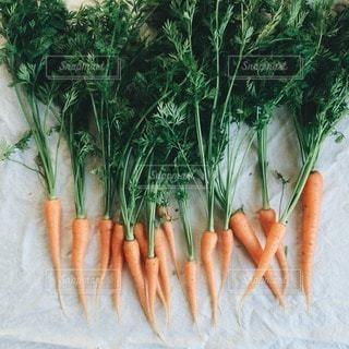 野菜の写真・画像素材[1973]