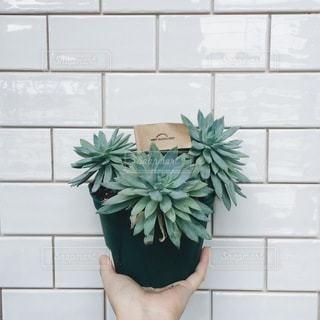 No.1899 植木鉢