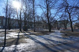 晴れた日の雪に覆われた樹木の写真・画像素材[1849770]
