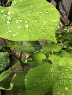 緑の植物のグループの写真・画像素材[769061]