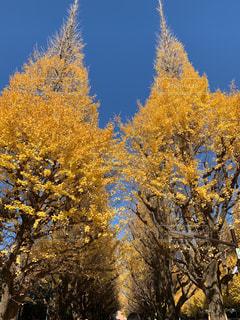 フォレスト内のツリーの写真・画像素材[1653523]