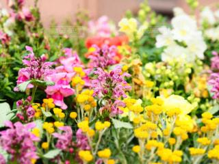 花壇の花の写真・画像素材[2085432]