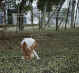 猫の写真・画像素材[264414]