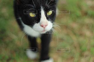 猫の写真・画像素材[267283]