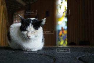 猫の写真・画像素材[267288]