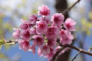 花の写真・画像素材[267299]
