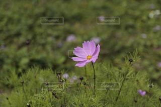 花の写真・画像素材[267303]