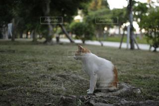 犬の写真・画像素材[267336]