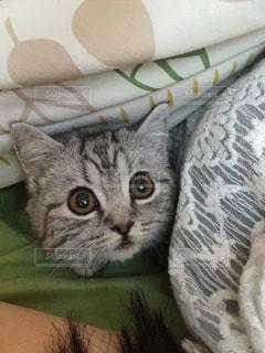 猫の写真・画像素材[233409]
