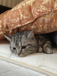 猫 - No.233410