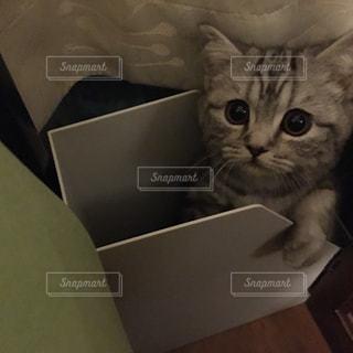 猫 - No.233416