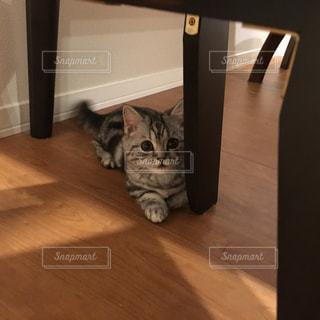 猫の写真・画像素材[233417]