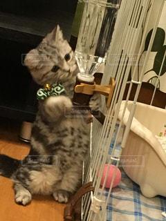 猫 - No.233418