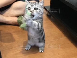 猫の写真・画像素材[233420]
