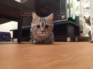 猫の写真・画像素材[234900]