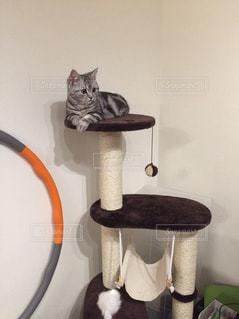 猫 - No.234902