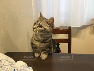猫の写真・画像素材[247443]