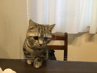 猫の写真・画像素材[247444]