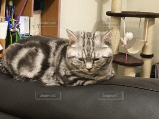 猫の写真・画像素材[247448]