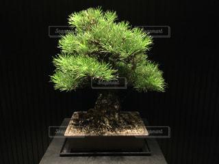 木の写真・画像素材[233533]