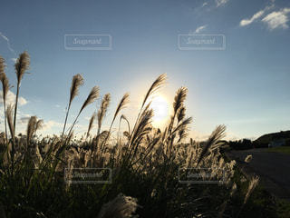 秋の写真・画像素材[305598]