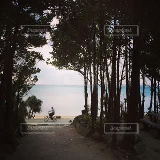 海の写真・画像素材[316312]