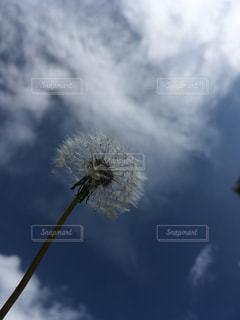 春の写真・画像素材[390917]