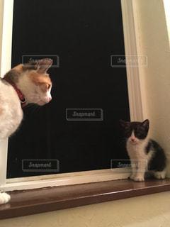 猫の写真・画像素材[457888]