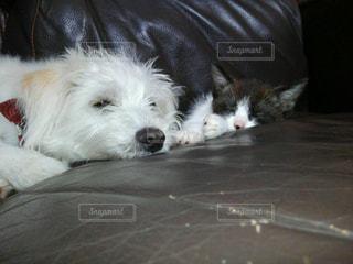 犬の写真・画像素材[520021]