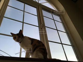 猫の写真・画像素材[583044]