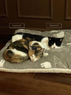 白い面の上に横たわる猫の写真・画像素材[983755]