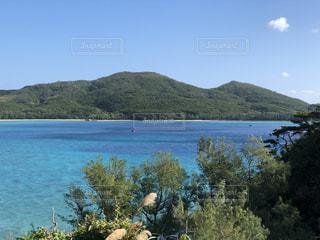 座間味島の海の写真・画像素材[995043]