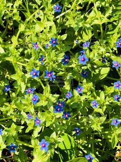 道端の花の写真・画像素材[1080012]