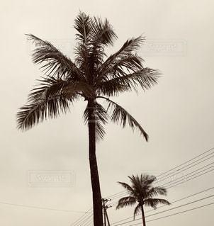 ヤシの木とビーチの写真・画像素材[1621238]