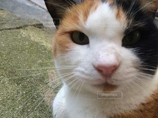猫 - No.233999