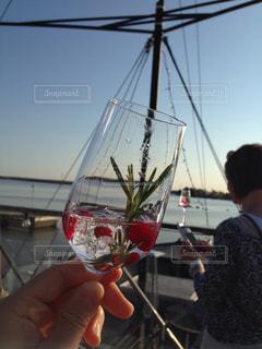 飲み物の写真・画像素材[268719]