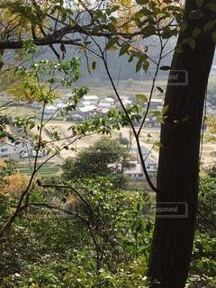 森林 - No.62687