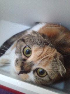猫の写真・画像素材[234298]