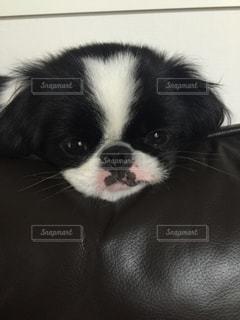 犬 - No.234563