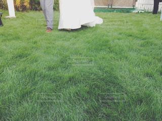 屋外結婚パーティーの写真・画像素材[235317]