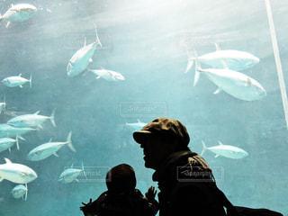 水族館の写真・画像素材[997640]