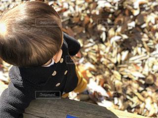 落ち葉の写真・画像素材[997730]