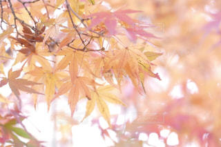 秋の写真・画像素材[234770]