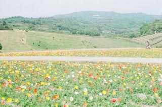 お花畑の写真・画像素材[999079]