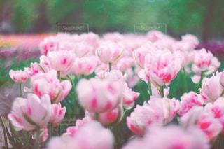 近くの花のアップの写真・画像素材[1154173]