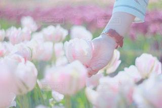 近くの花のアップの写真・画像素材[1154174]