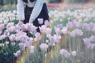 近くの花のアップの写真・画像素材[1154175]