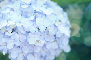 近くの花のアップの写真・画像素材[1224208]